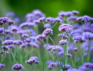 10 Gorgeous Flowers That Will Survive the Summer Heat