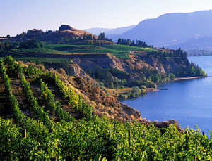 This Is the Breathtaking, Affordable Wine Destination You Haven't Heard Of