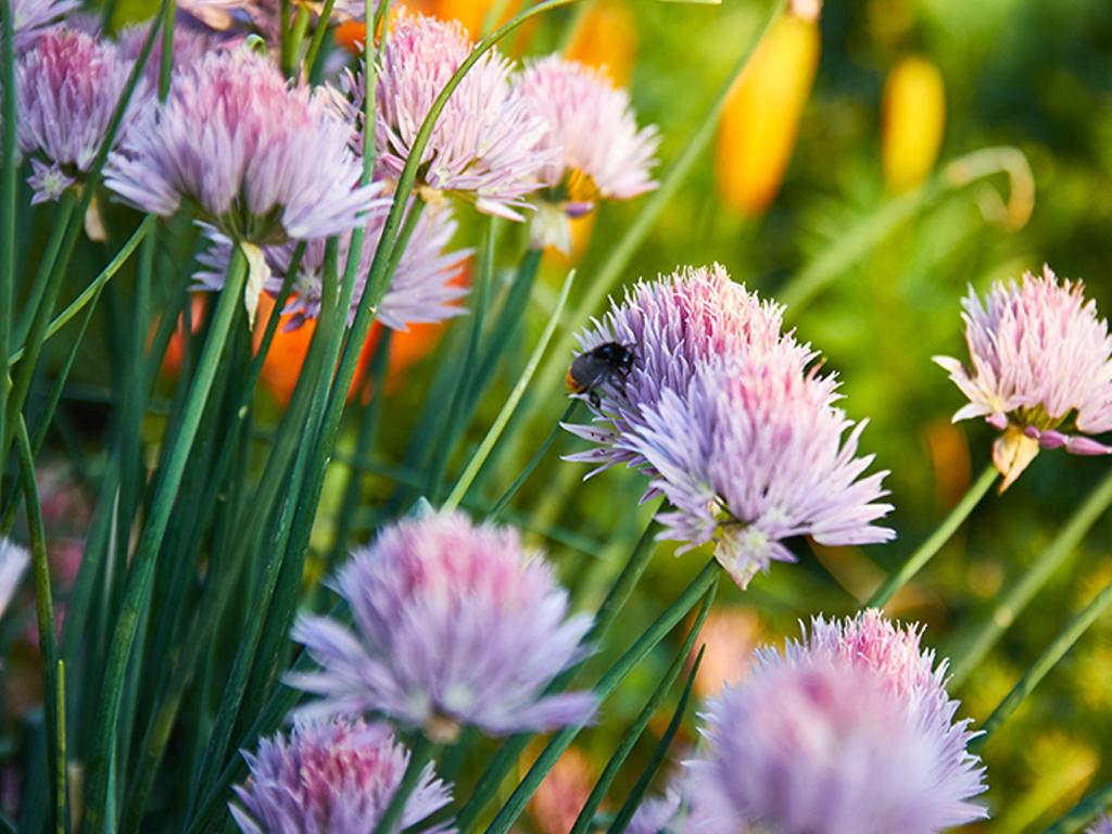 The 9 Easiest Herbs to Start an Herb Garden