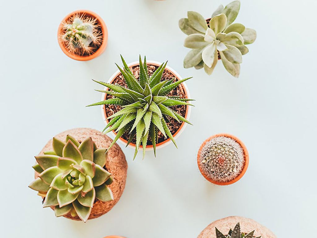 3 Essential Tips for Growing Succulents (and 3 Common Mistakes You're Probably Making)
